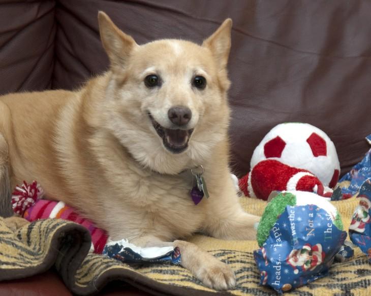 perro entre juguetes y pelota roja