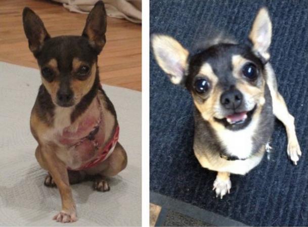Little G antes y después de ser adoptada