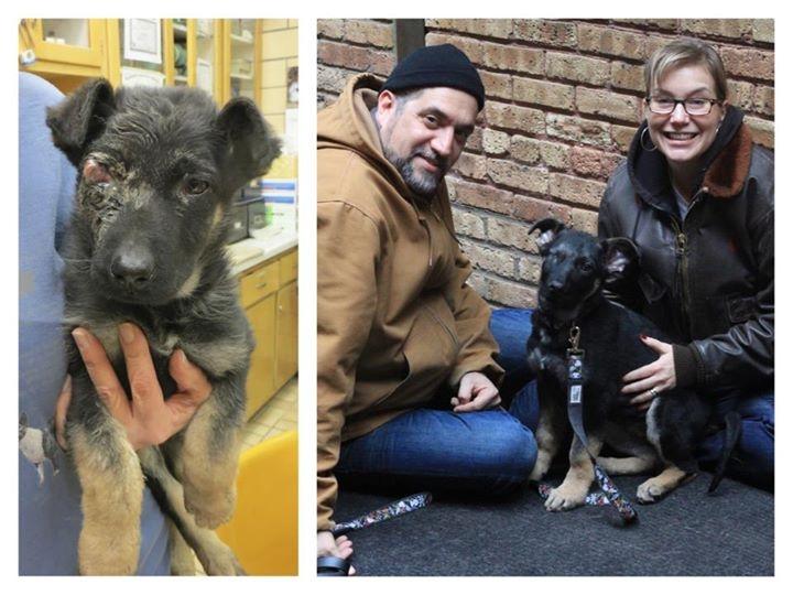 Perrito antes y después de ser adoptado