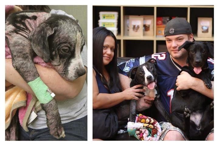 Birdie antes y después de ser adoptado