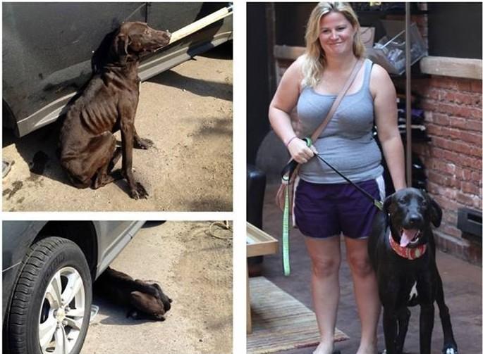 Potra antes y después de ser adoptada