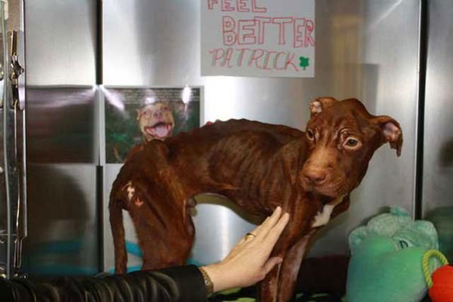 Patrick antes de ser sanado
