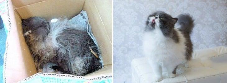 Gato Kody antes y después de su adopción