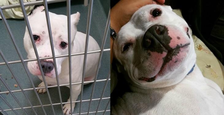 Pillow antes y después de ser adoptado