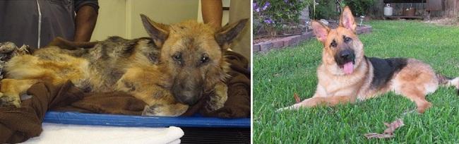 Max, antes y después de la adopción