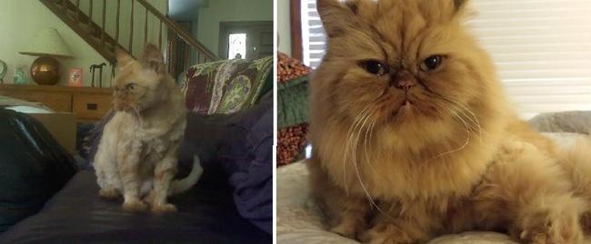 Gatito Lulu antes y después de ser adoptado
