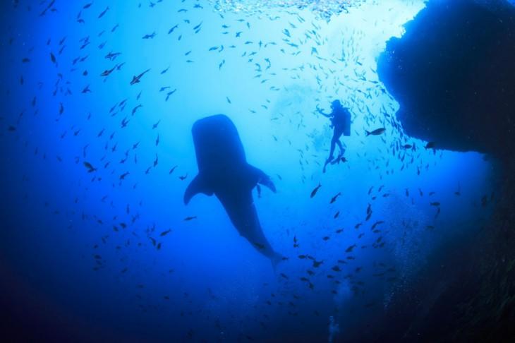 Lugar en Costa Rica para nadar con tiburones