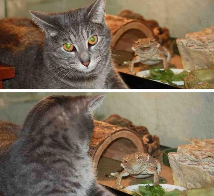 gato con sapo en una foto