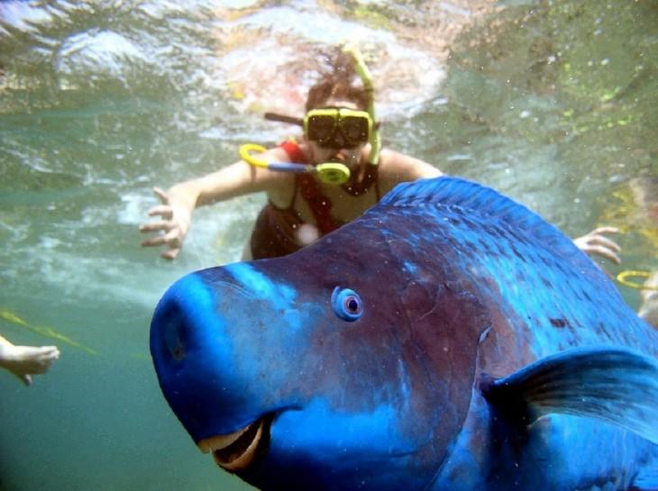 pez azul con buceadora