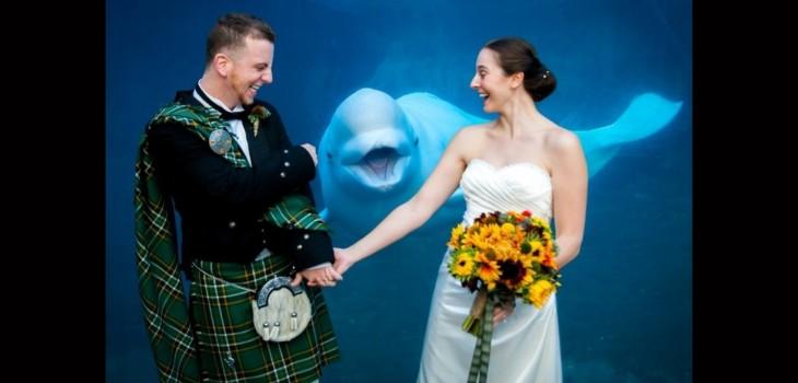 una beluga con recien casados