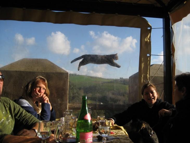 personas comiendo y gato saltando