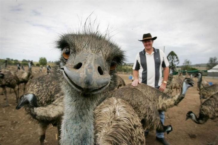 emu con un hombre atras