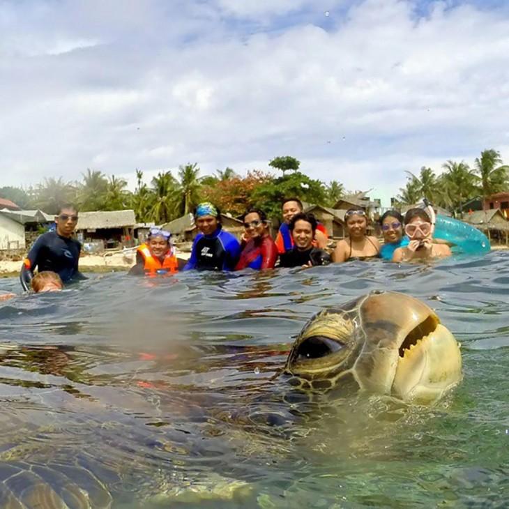 una tortuga en la playa con gente