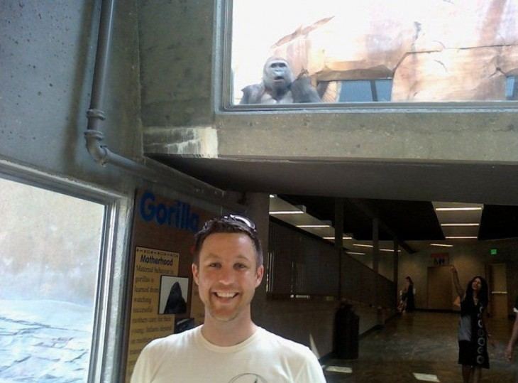 hombre y gorila en el zoologico