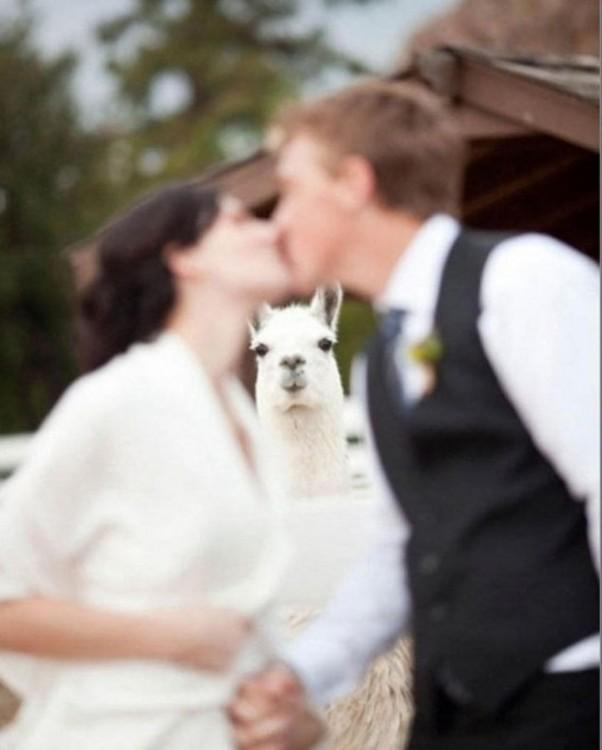 recien casados y una llama