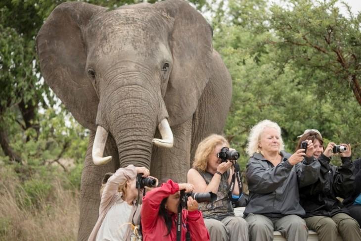 elefante aparece por atras de los turistas