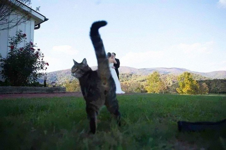 gato y una pareja de recien casado