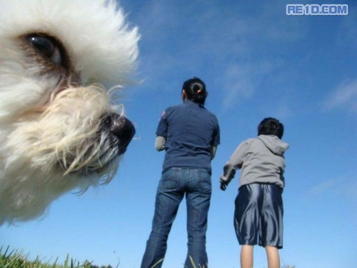 perro caniche con dos personas