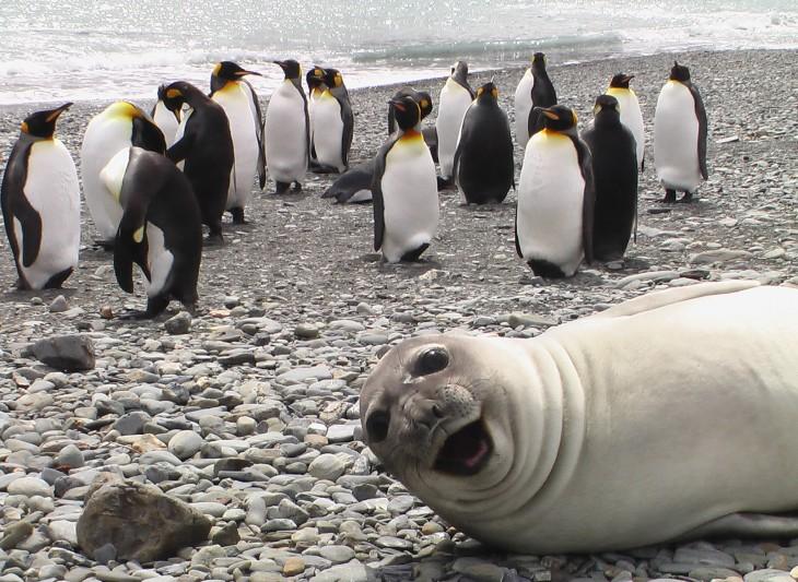 foca con pinguinos en el artico