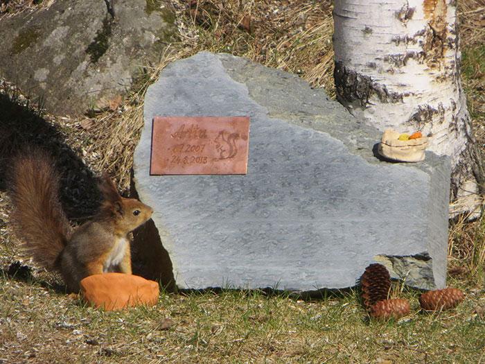 ardilla roja de finlandia al lado de una tumba