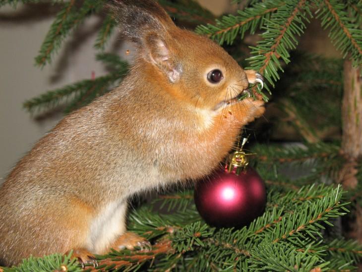 ardilla roja de finlandia en arbold e navidad
