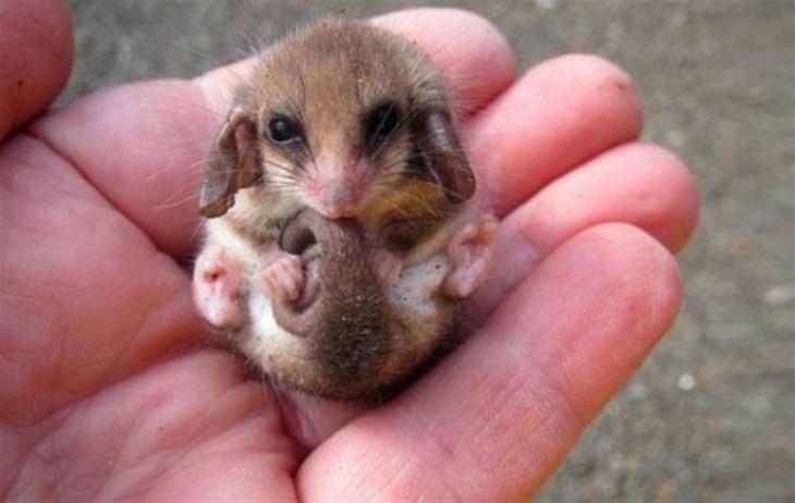 Bebé burrámido en la mano de una persona