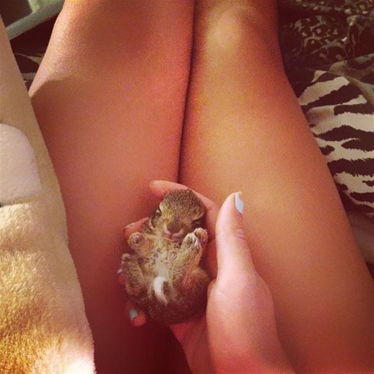 Bebé Conejo en las piernas de una mujer