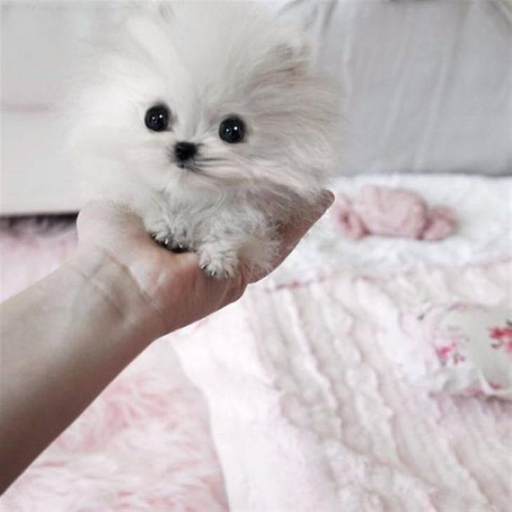 cachorro blanco en la mano