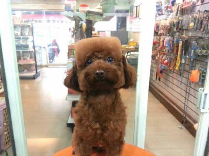 Corte de pelo en perro cabeza cuadrada