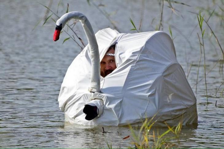 Fotógrafo disfrazado de cisne