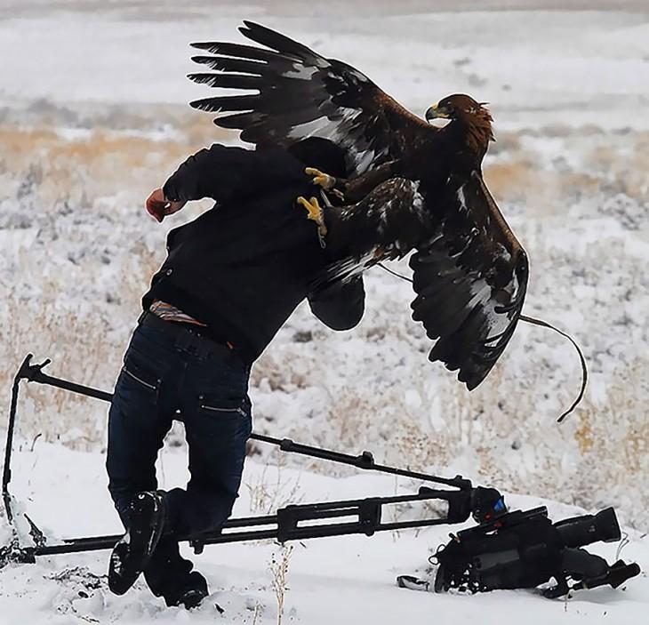 Fotógrafo atacado por un águila