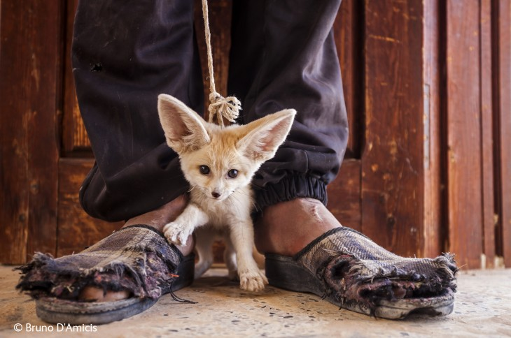 hombre con un zorro a sus pies