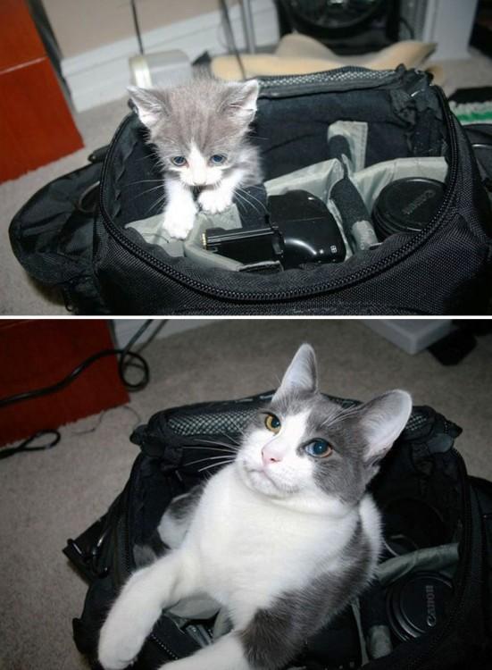 Antes y después de un gato dentro de un estuche de cámara