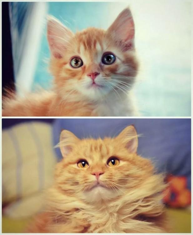 Antes y después de un gato en la misma pose
