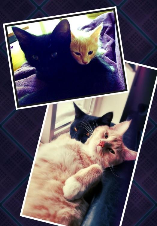 Antes y después de dos gatos