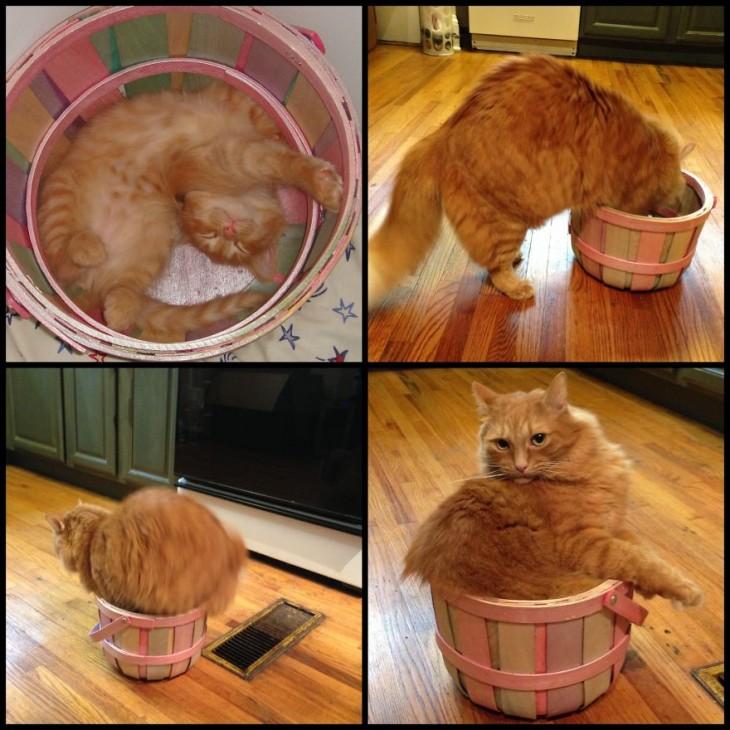 Antes y después de un gato en un canasto