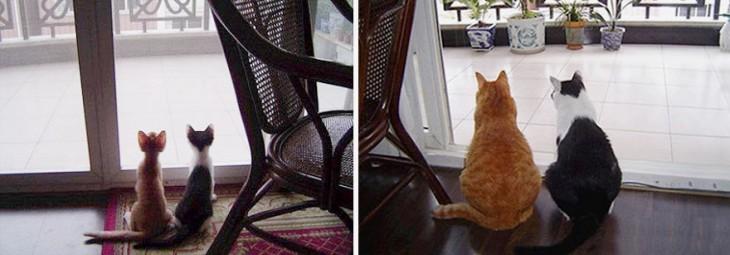 Antes y después de dos gatos juntos en una casa