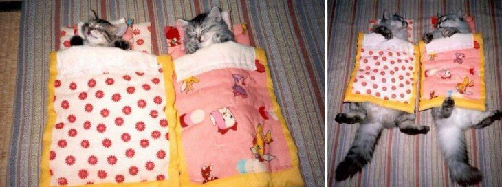 Antes y después de unos gatos cobijados