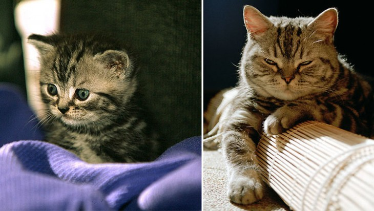 Antes y después de un gato