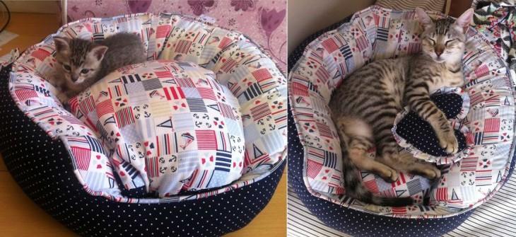 Antes y después de un gato en su cama