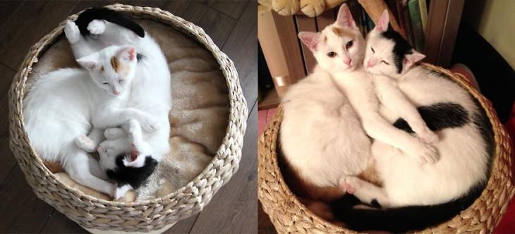 Antes y después de unos gatos dentro de un canasto