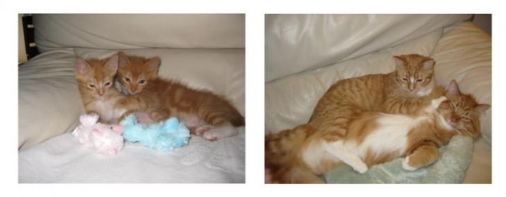Antes y después de unos gatos