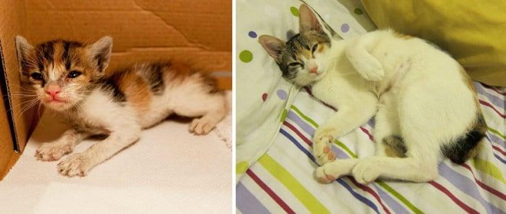 Antes y después de un gato adoptado