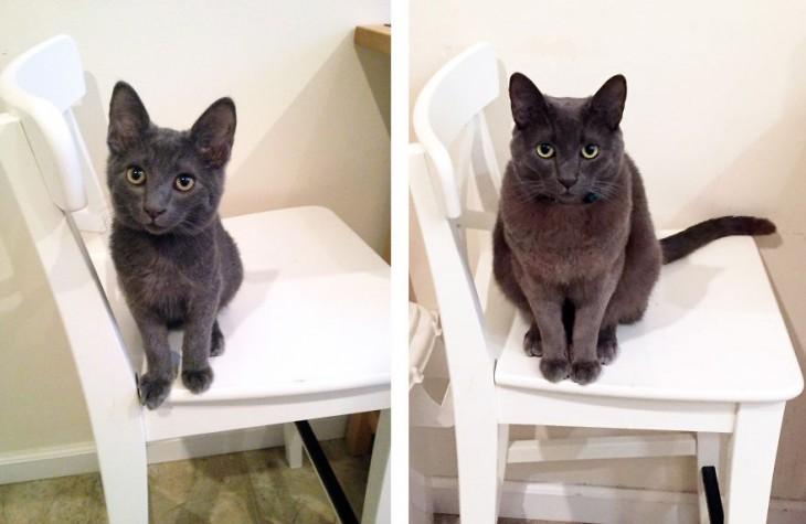 Antes y después de un gato sobre una silla