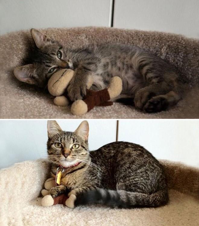 Antes y después de un gato acostado