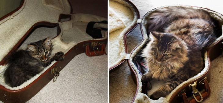 Antes y después de un gato dentro de un estuche