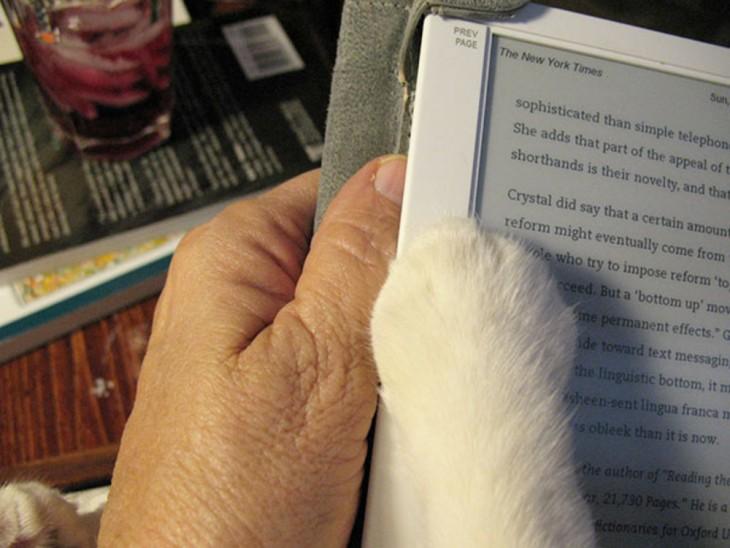 mano de persona y garra de un gato juntas