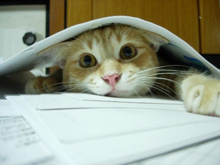 gato entre hojas de estudio