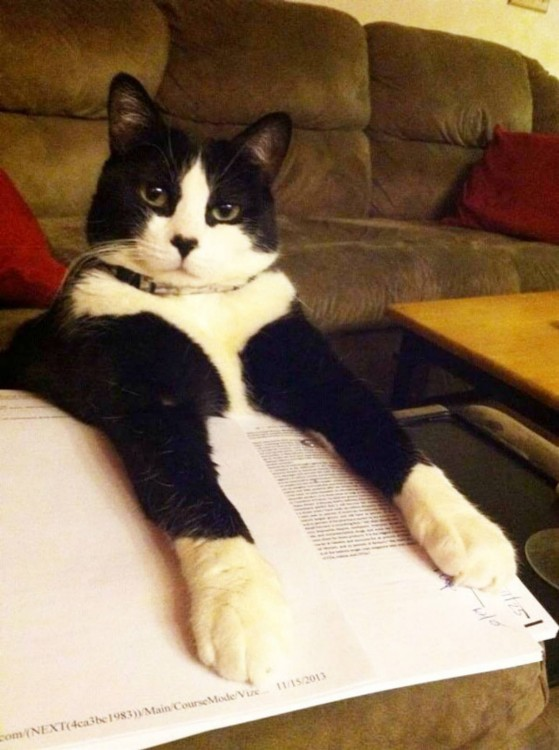 Gato tapando un libro