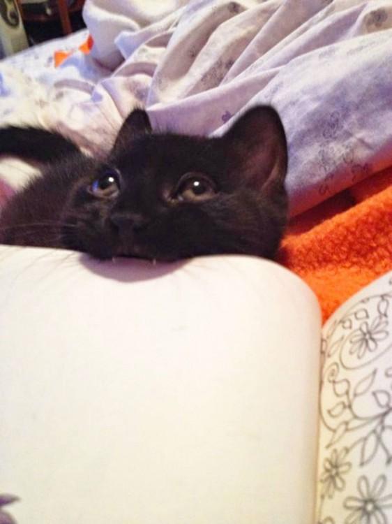 Gato mordiendo un libro